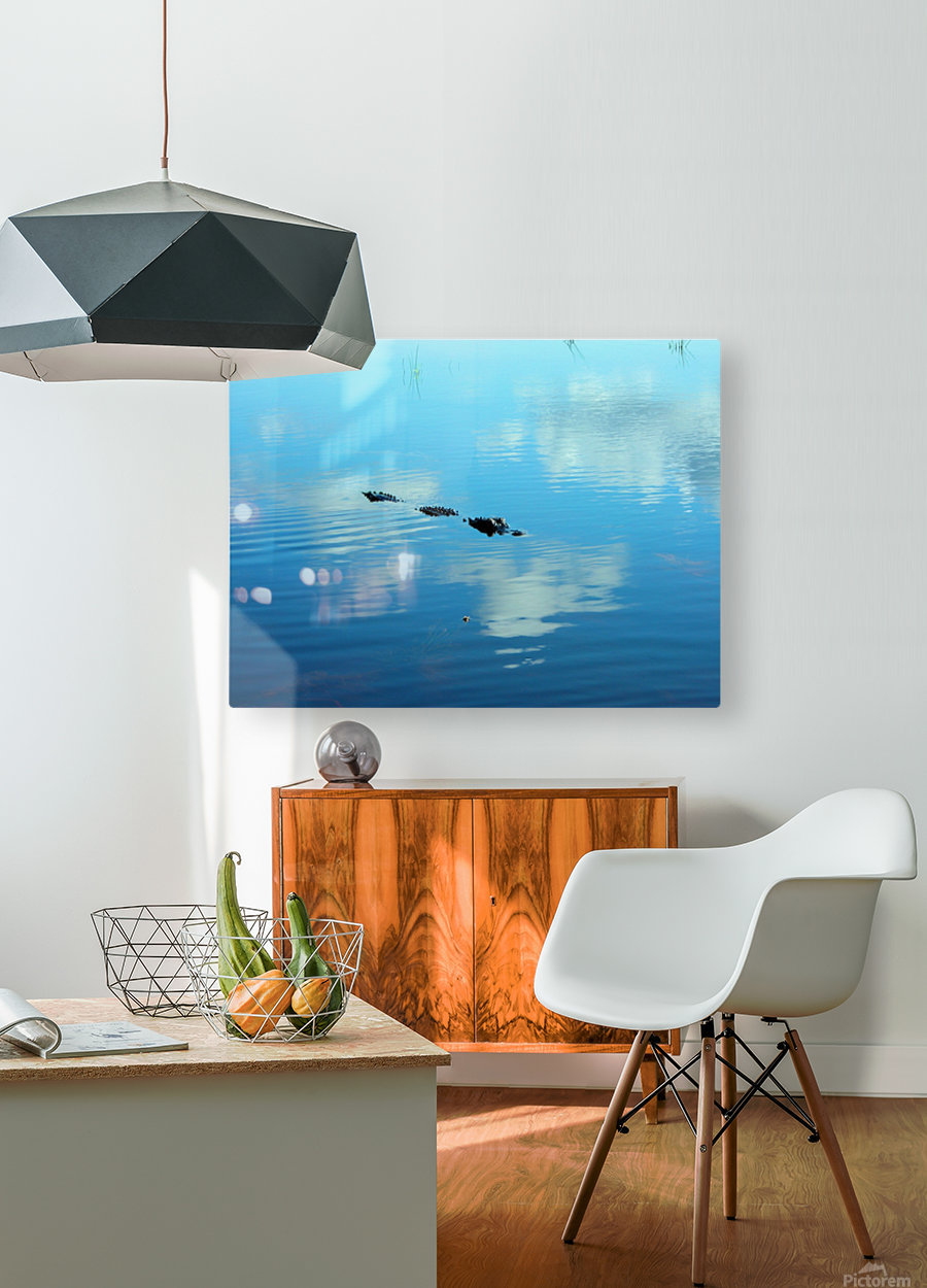 Everglades1  HD Metal print with Floating Frame on Back