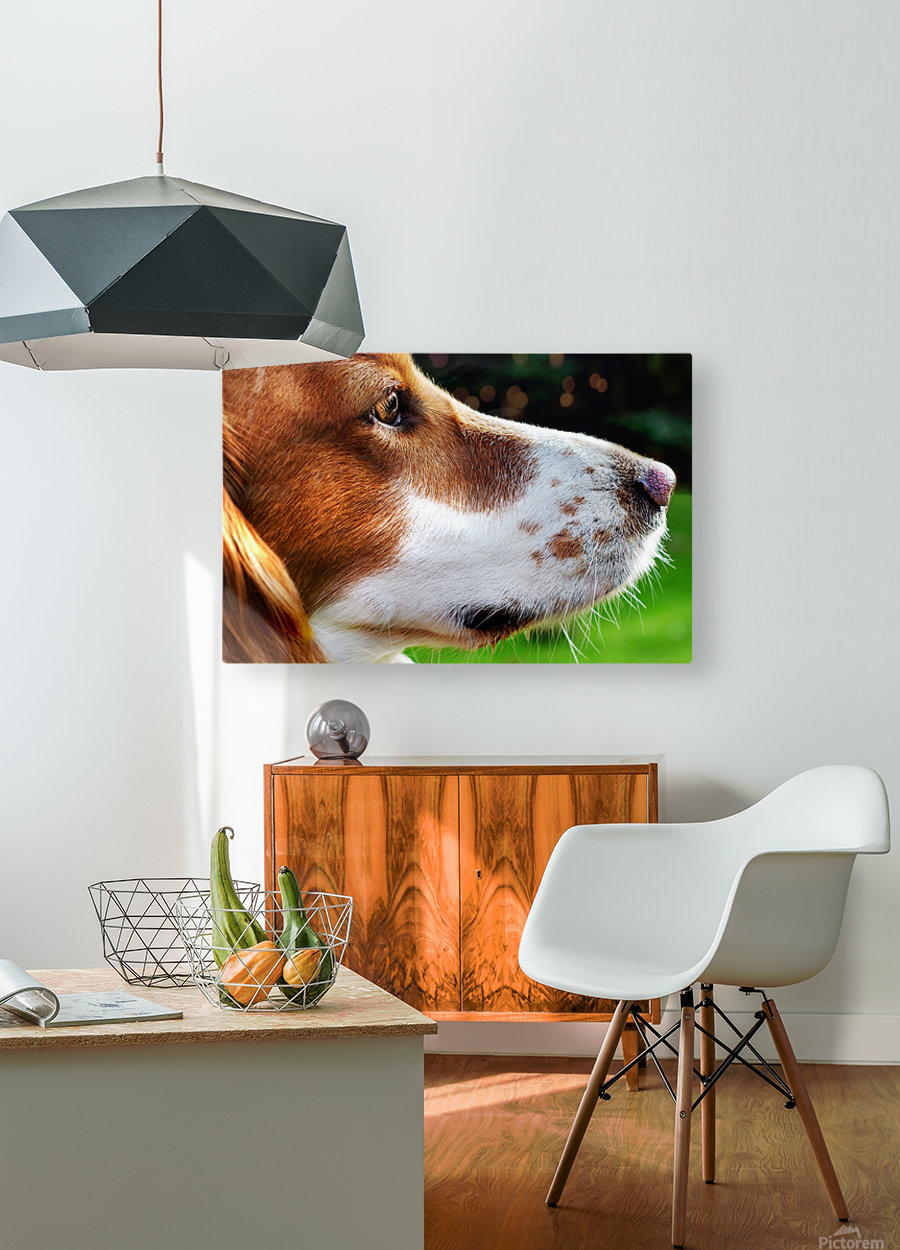 Cocker Spaniel Up Close  HD Metal print with Floating Frame on Back