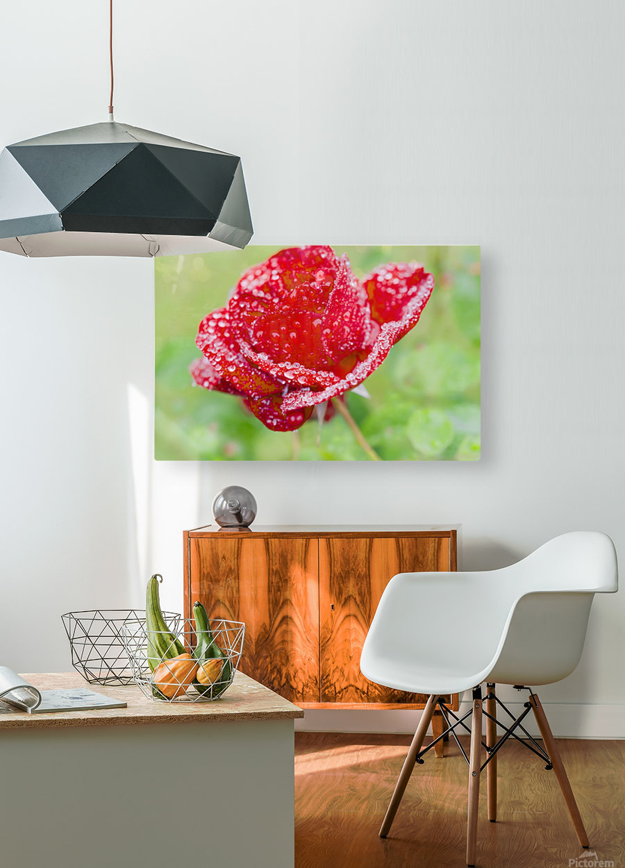 Raindrops and Roses  HD Metal print with Floating Frame on Back