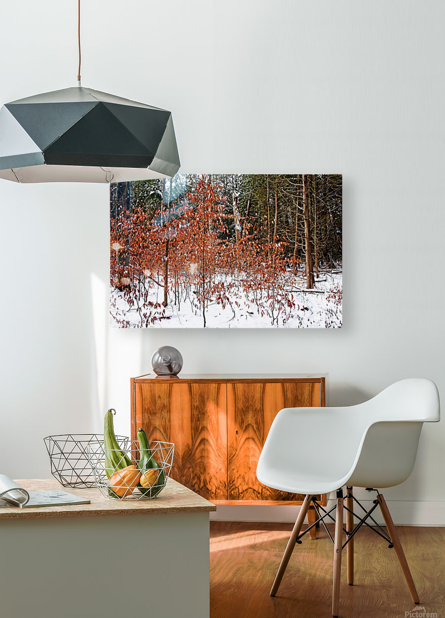 Fall Beech Trees  HD Metal print with Floating Frame on Back