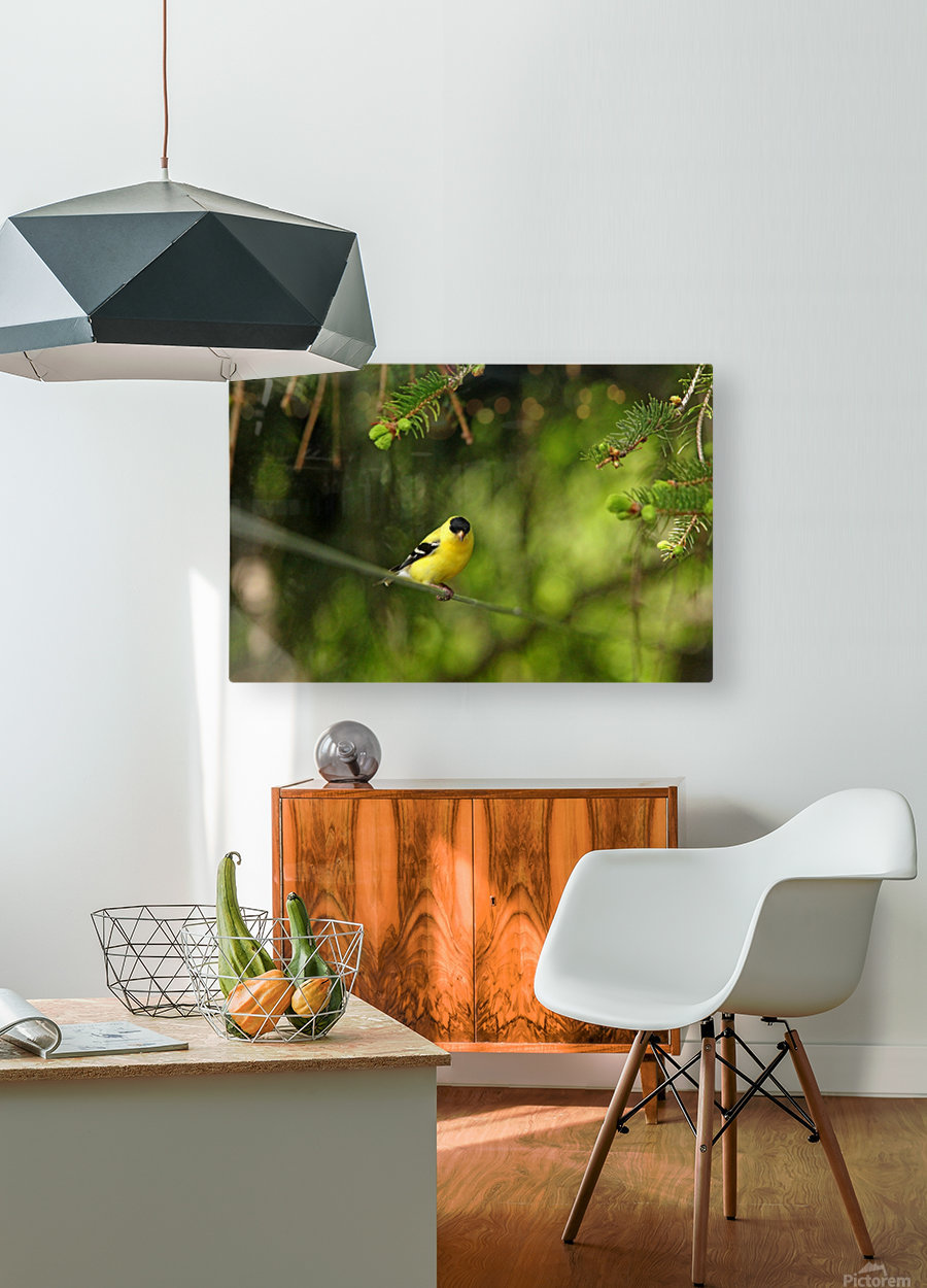Goldfinch On The Disappearing Line  HD Metal print with Floating Frame on Back