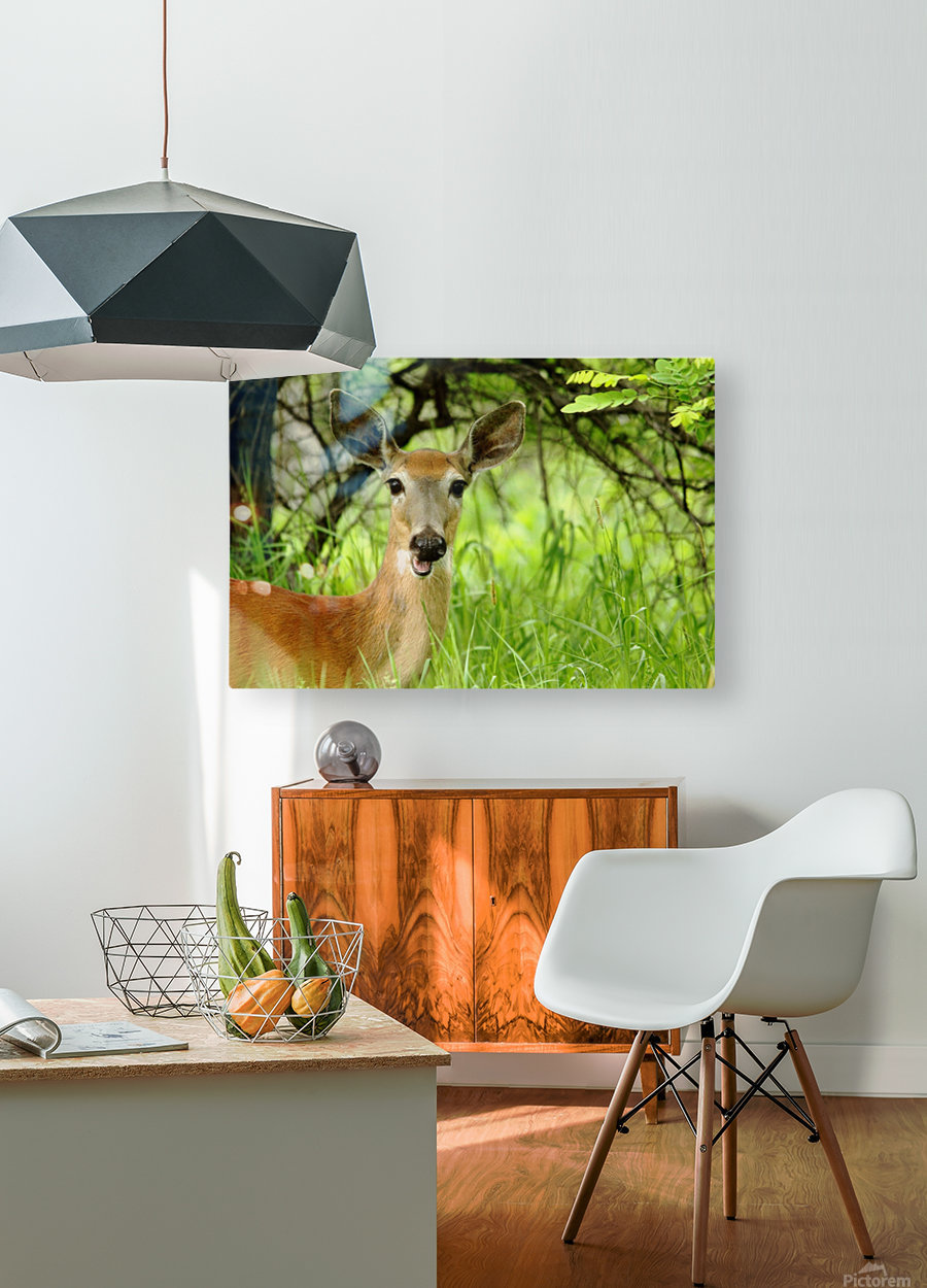 White   Tailed Deer Close Up  HD Metal print with Floating Frame on Back