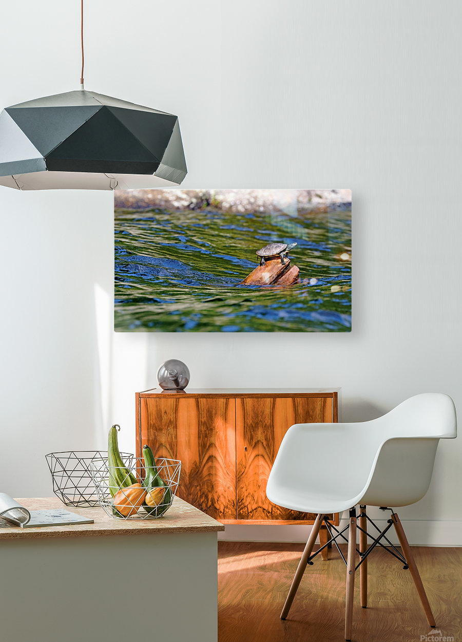 Map Turtle  HD Metal print with Floating Frame on Back