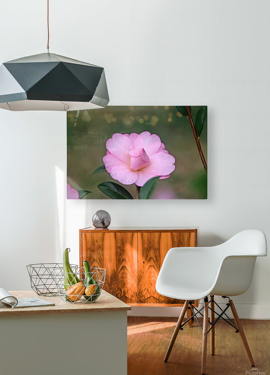 Pink Camellia  HD Metal print with Floating Frame on Back