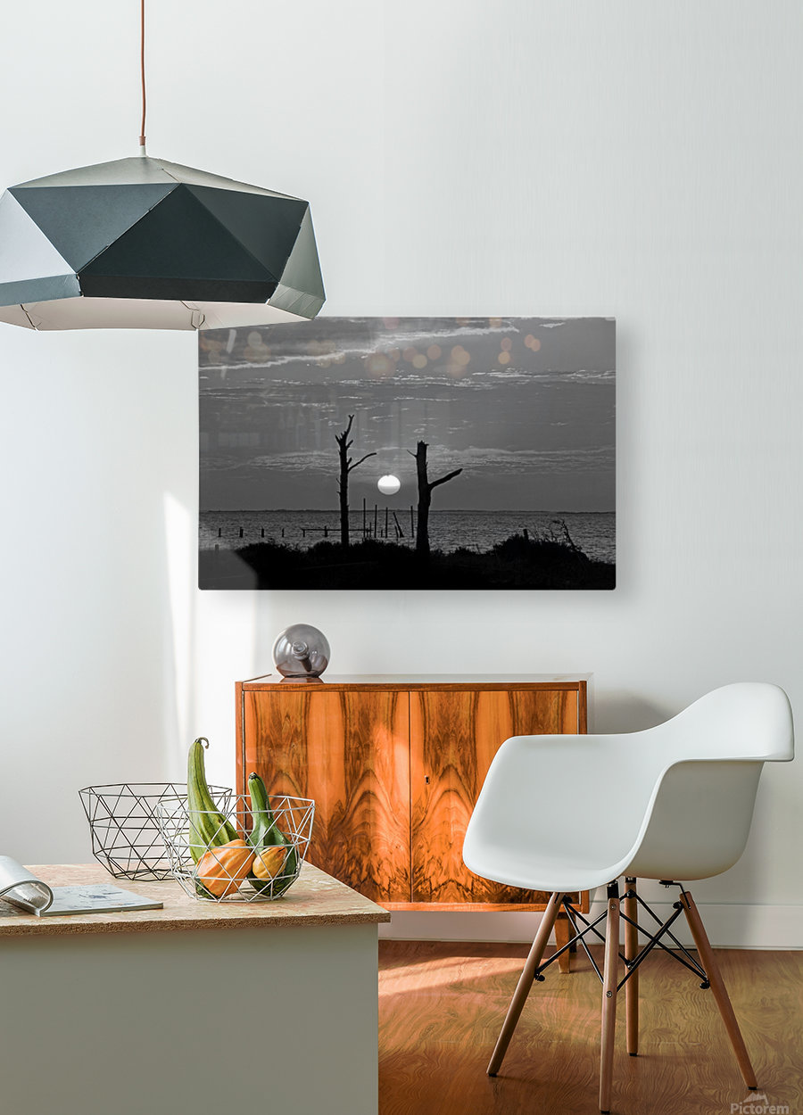 BW Two Tree Sunset  HD Metal print with Floating Frame on Back