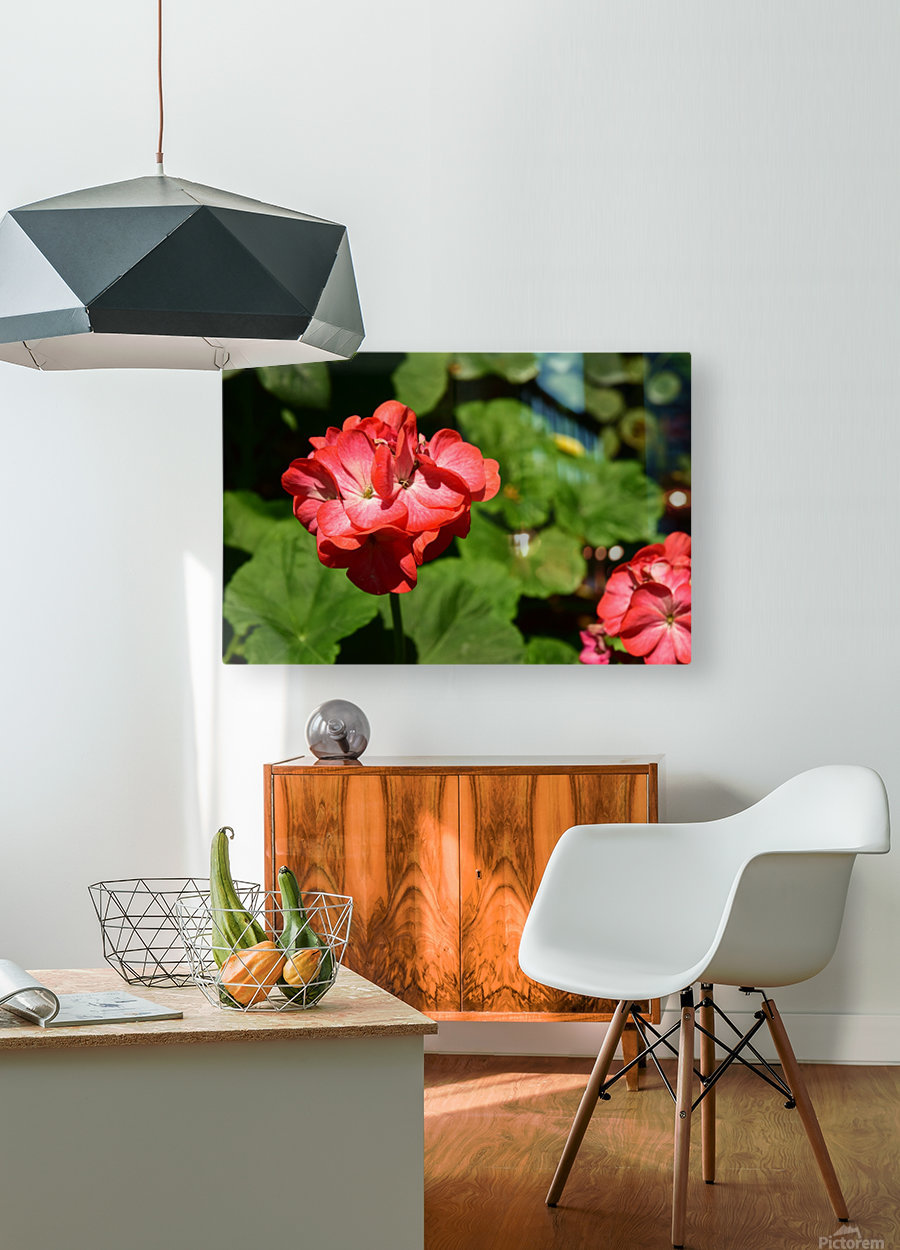 Plants - Flowers - 010  HD Metal print with Floating Frame on Back