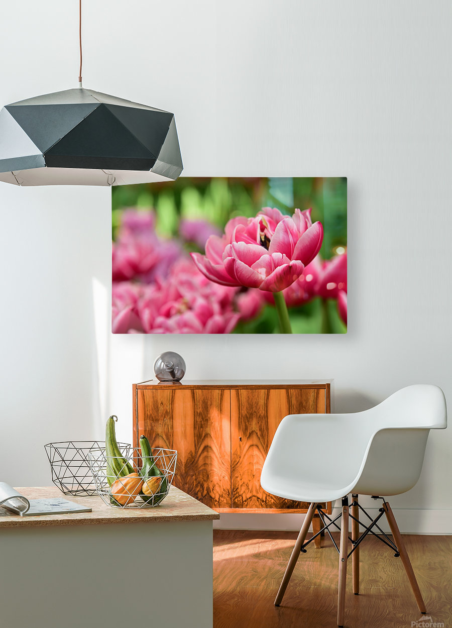 Plants - Flowers - 013  HD Metal print with Floating Frame on Back