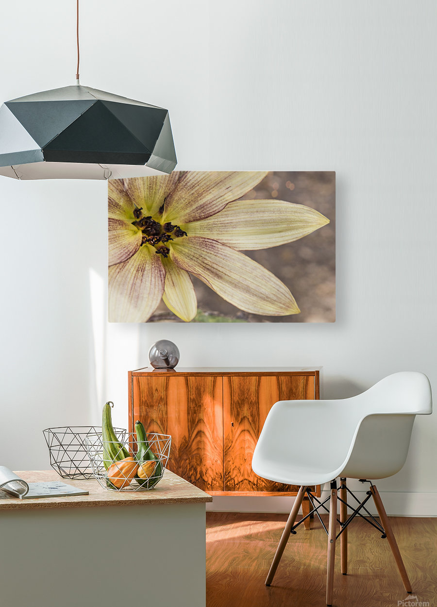 Yellow petals  HD Metal print with Floating Frame on Back