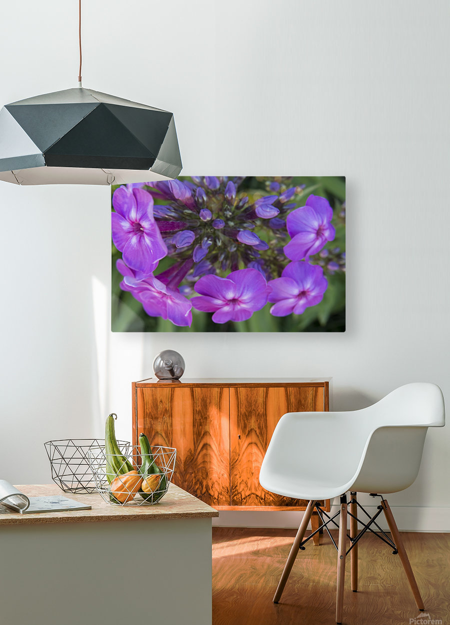 Purple Flower Blooming  HD Metal print with Floating Frame on Back