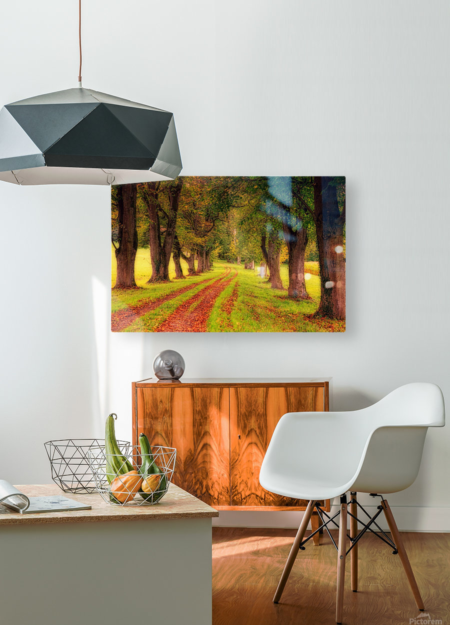 tree, avenue, nature, landscape, tree lined avenue, away, distance, trail, autumn, leaves, forest, green, mood, green leaves, lane, path,  HD Metal print with Floating Frame on Back
