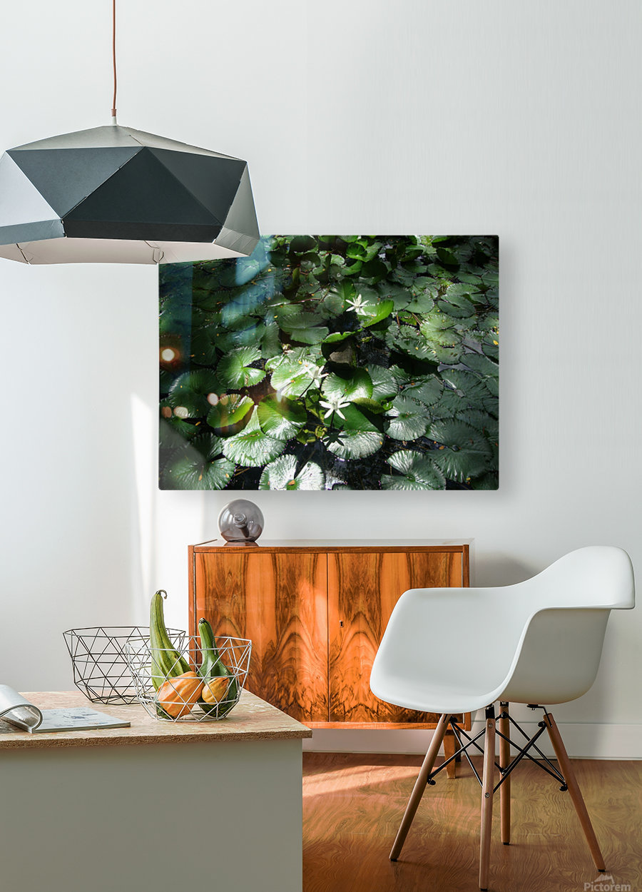Lotus in the Sunlight  HD Metal print with Floating Frame on Back