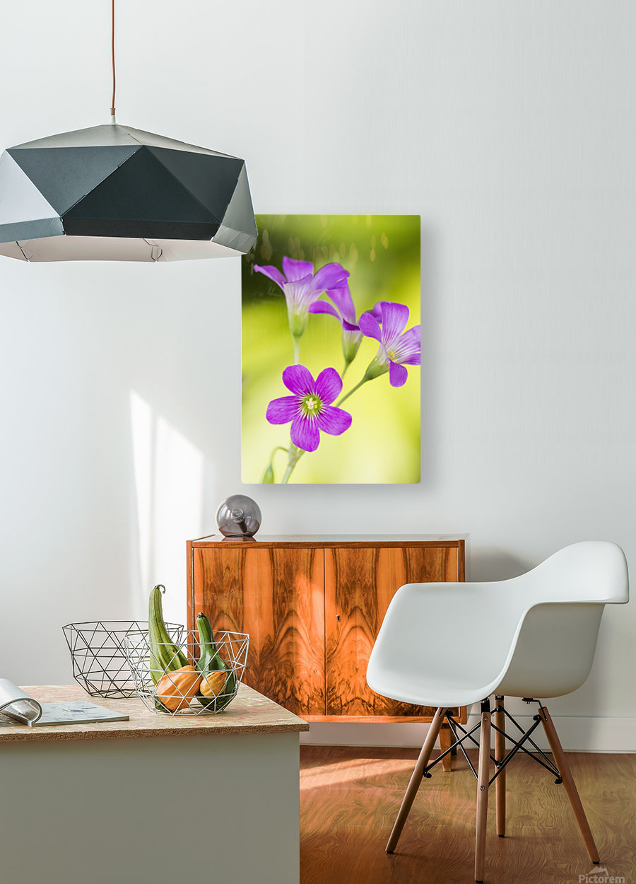 Little Pink Flowers  HD Metal print with Floating Frame on Back