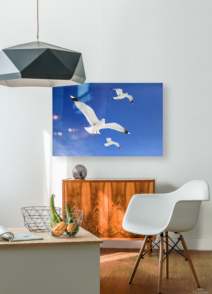Seagulls  HD Metal print with Floating Frame on Back