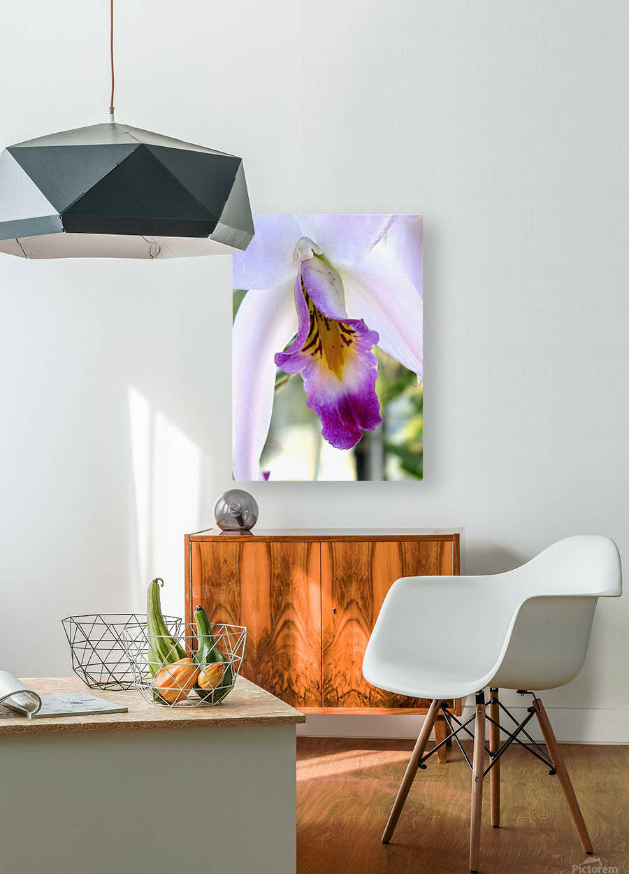 Orchid Poem  HD Metal print with Floating Frame on Back