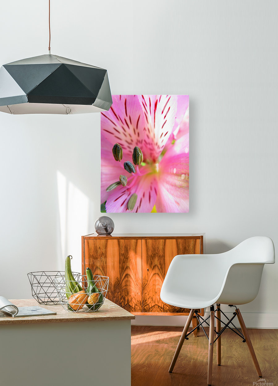Gentle Pink  HD Metal print with Floating Frame on Back