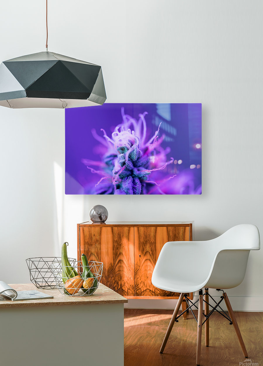 FloweringPhase  HD Metal print with Floating Frame on Back