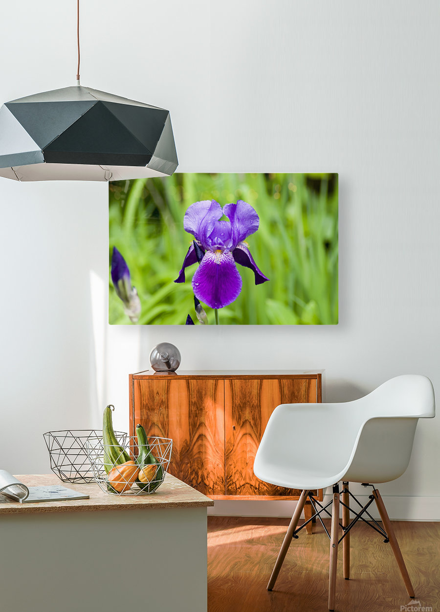 Purple Bearded Iris 6  HD Metal print with Floating Frame on Back