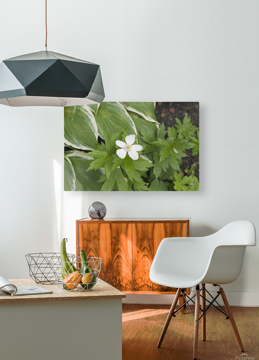 Wood Anenome  HD Metal print with Floating Frame on Back