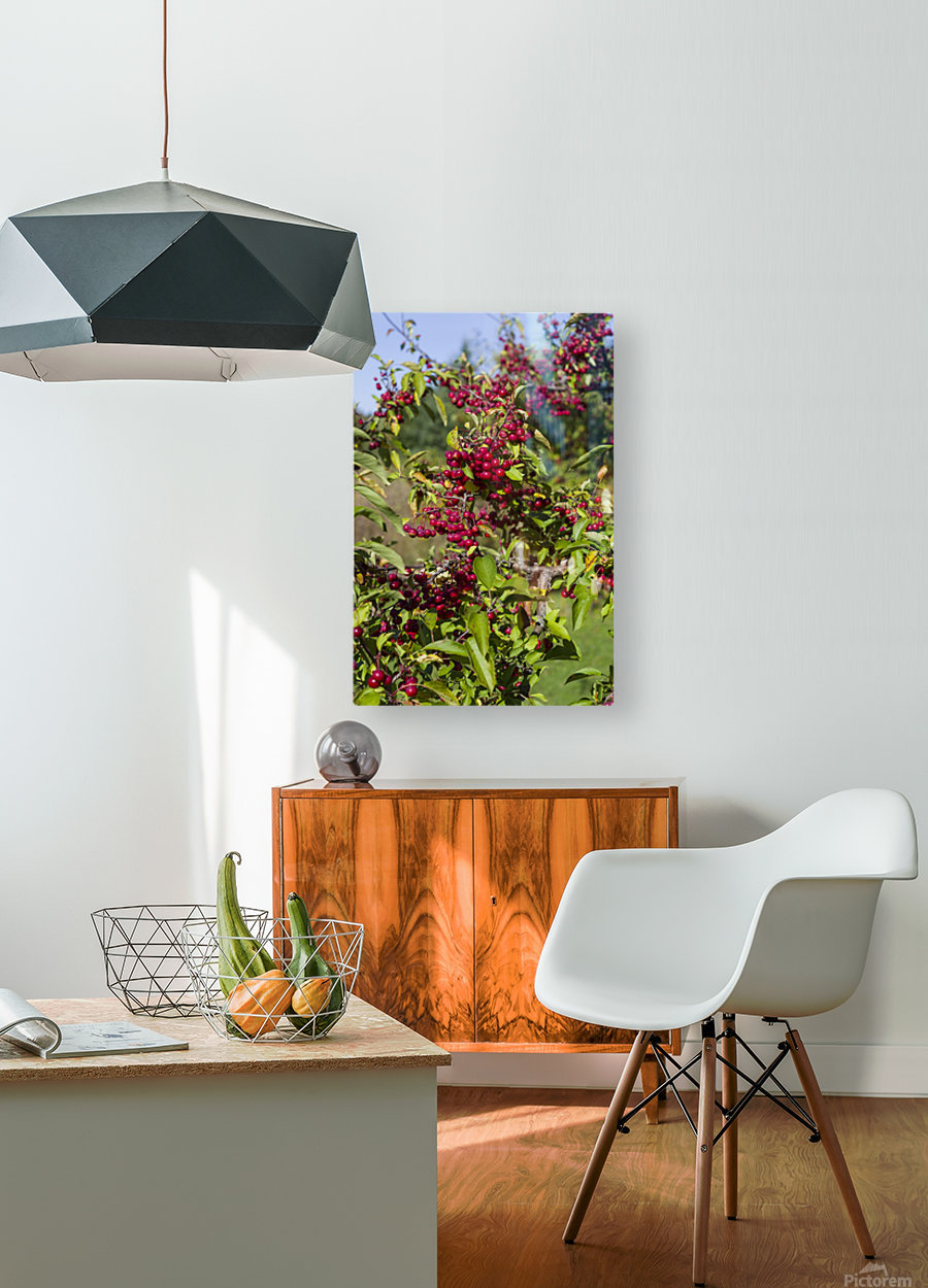 Sumac Bush in Autumn 2  HD Metal print with Floating Frame on Back
