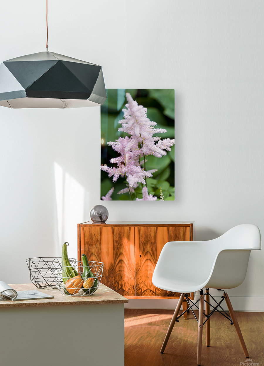Pink Astilbe 2  HD Metal print with Floating Frame on Back