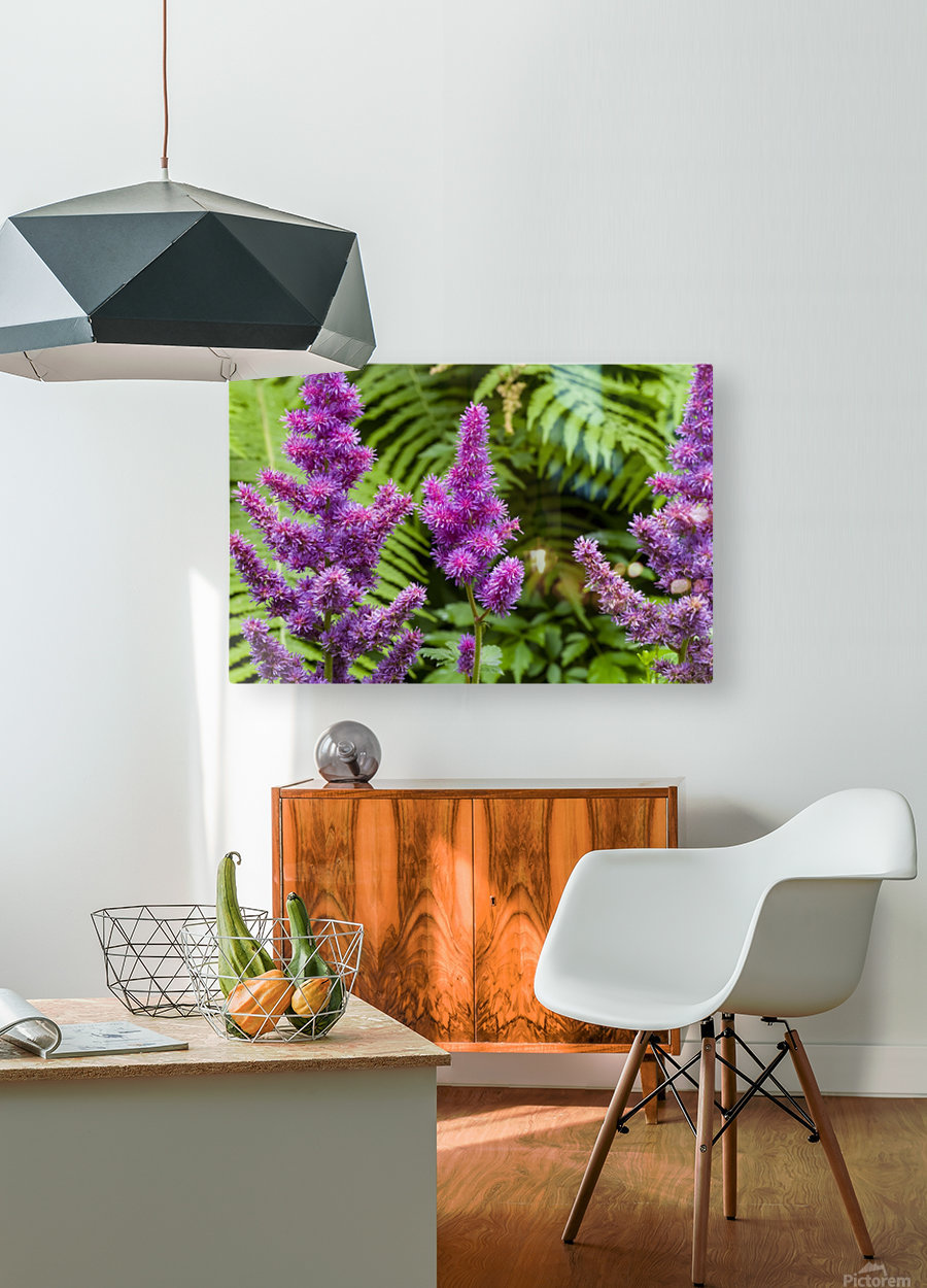 Red Astilbe 1  HD Metal print with Floating Frame on Back