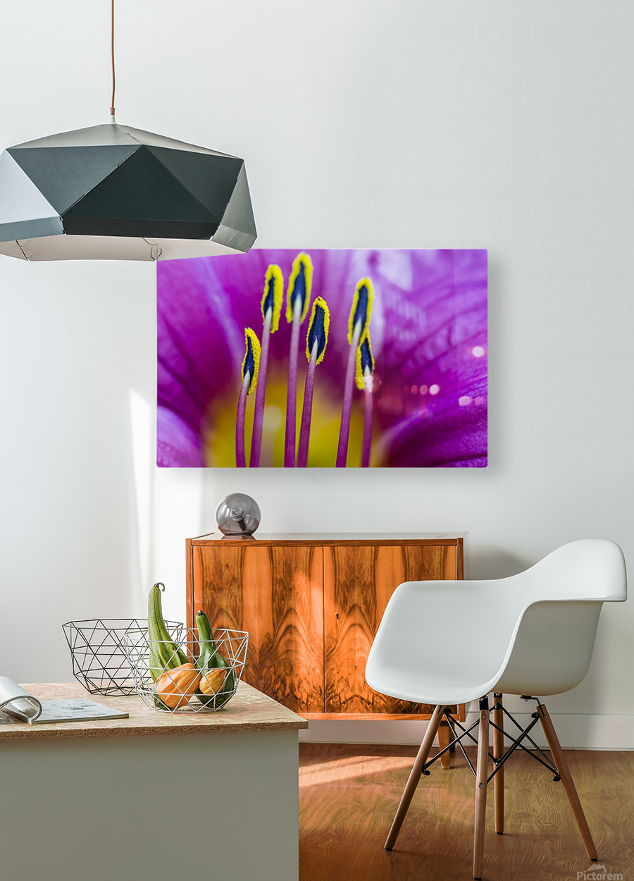 Macro of Purple Day Lily Stamen  HD Metal print with Floating Frame on Back