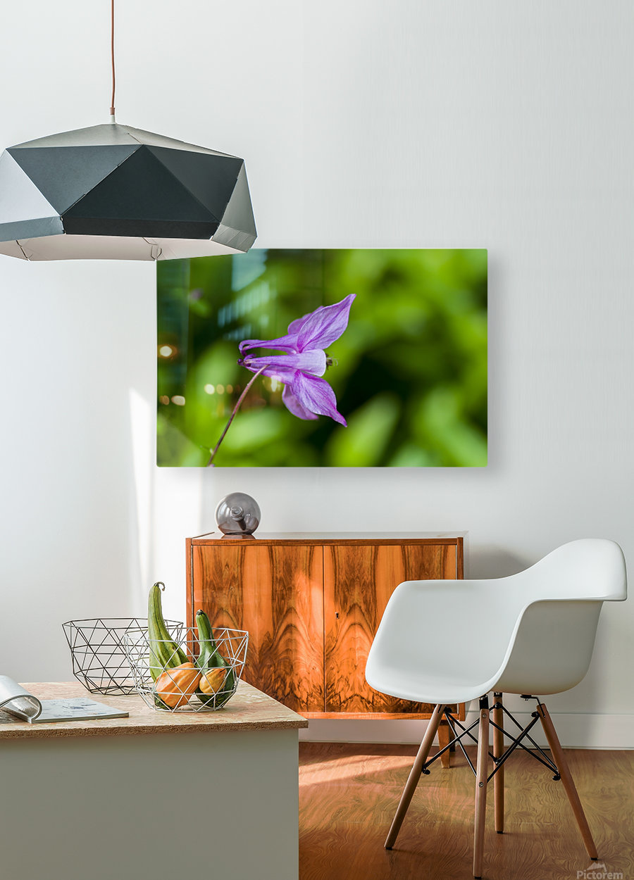 Purple Columbine 2  HD Metal print with Floating Frame on Back