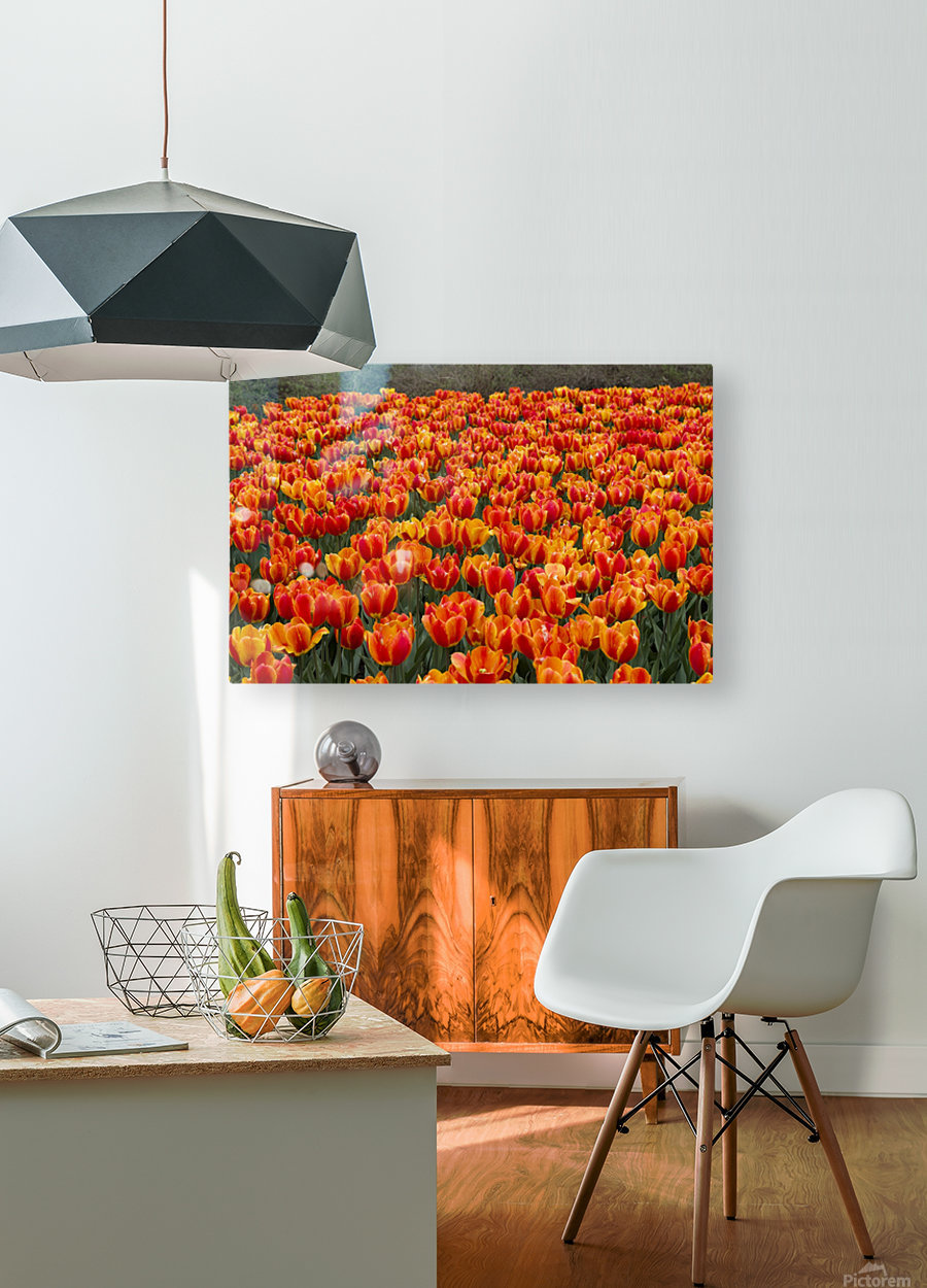 Ottawa Tulip Festival 9  HD Metal print with Floating Frame on Back
