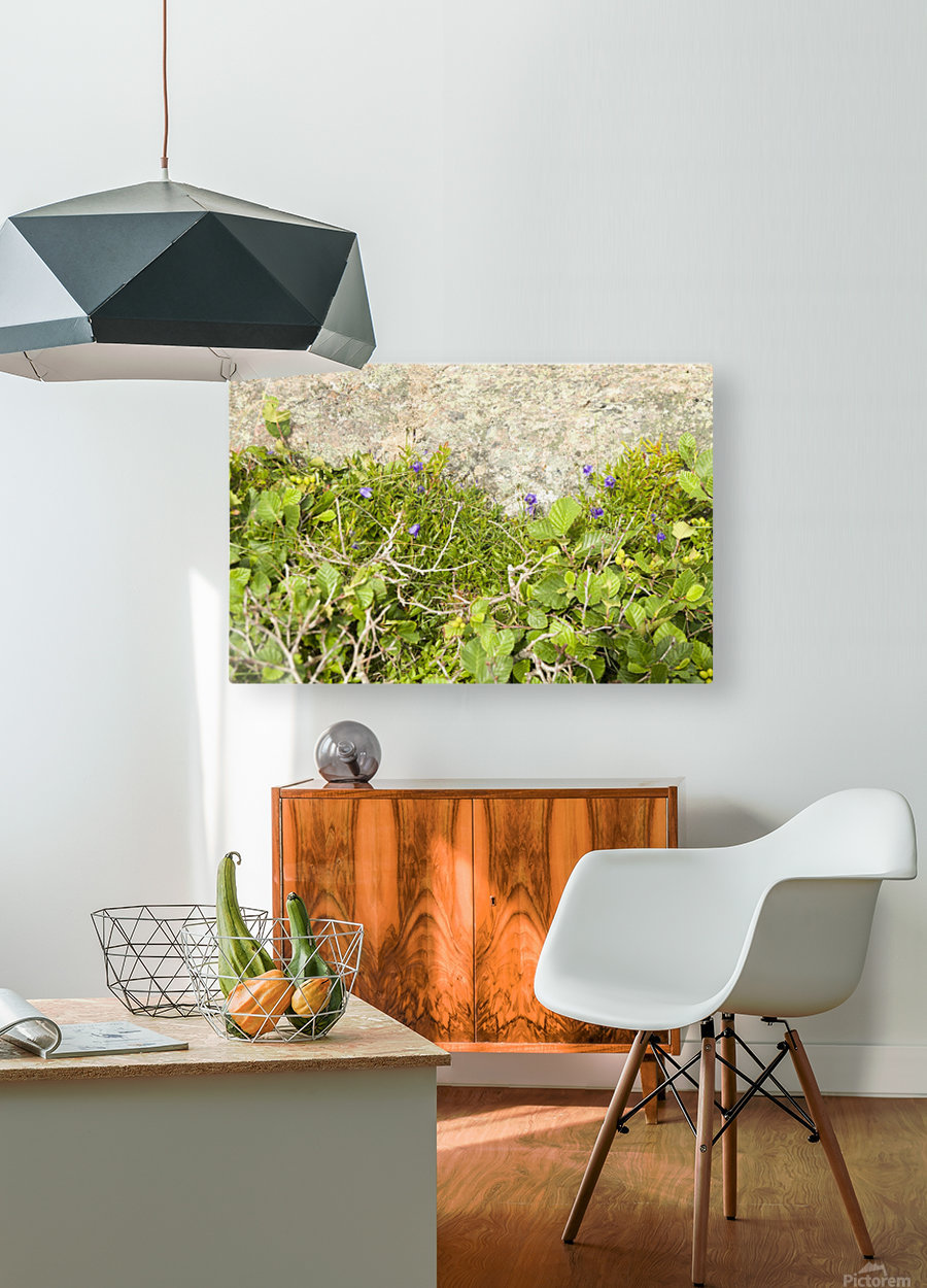 Cape Spears Flowers and vegetation   HD Metal print with Floating Frame on Back