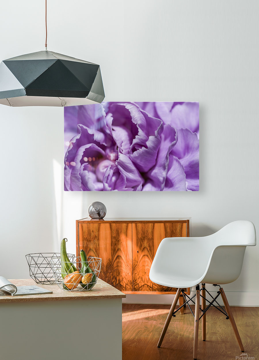 Purple Carnation  HD Metal print with Floating Frame on Back