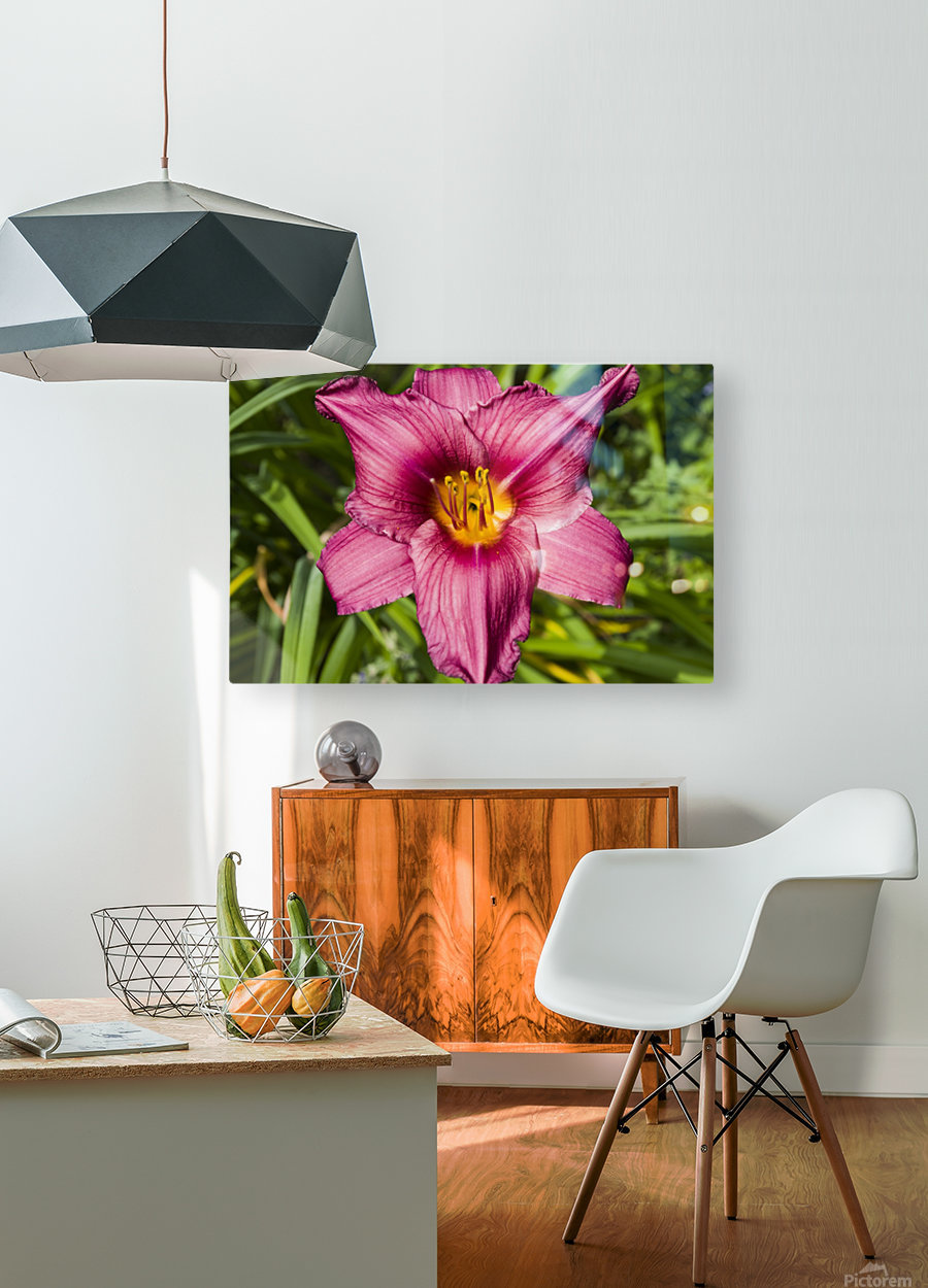 Purple Stella Doro Day Lily Flowers 2  HD Metal print with Floating Frame on Back