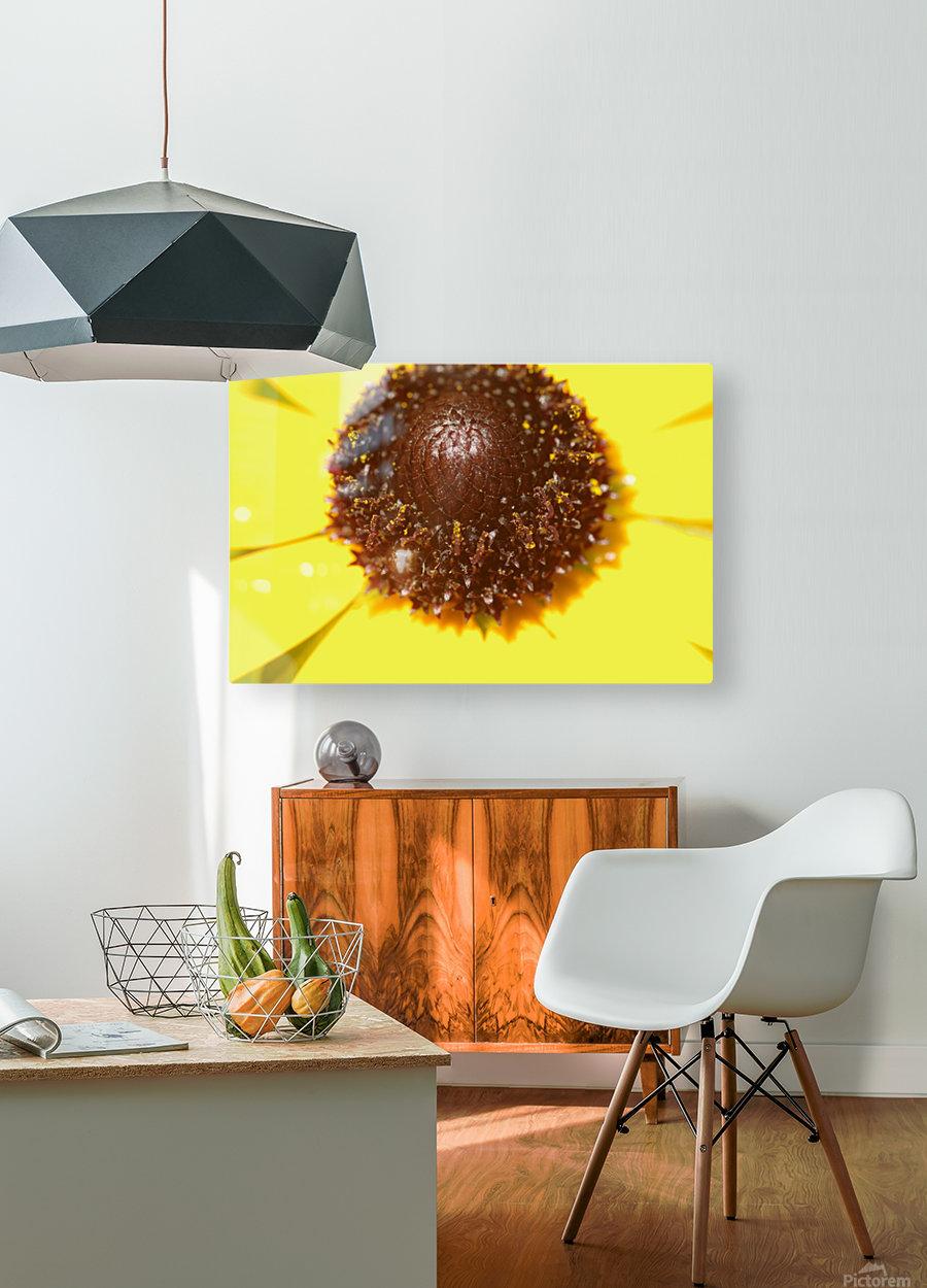 Brown eyed Susan Macro  HD Metal print with Floating Frame on Back