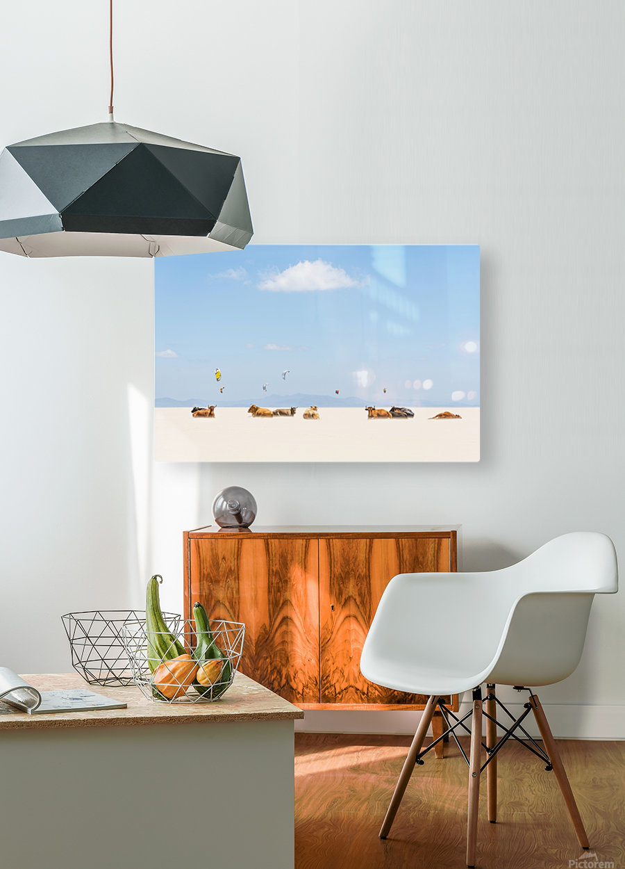 COWS AND KITES  HD Metal print with Floating Frame on Back
