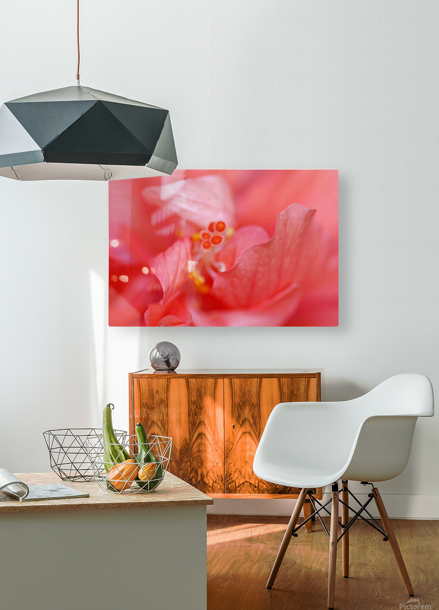 Double Peach Hibisicus  HD Metal print with Floating Frame on Back