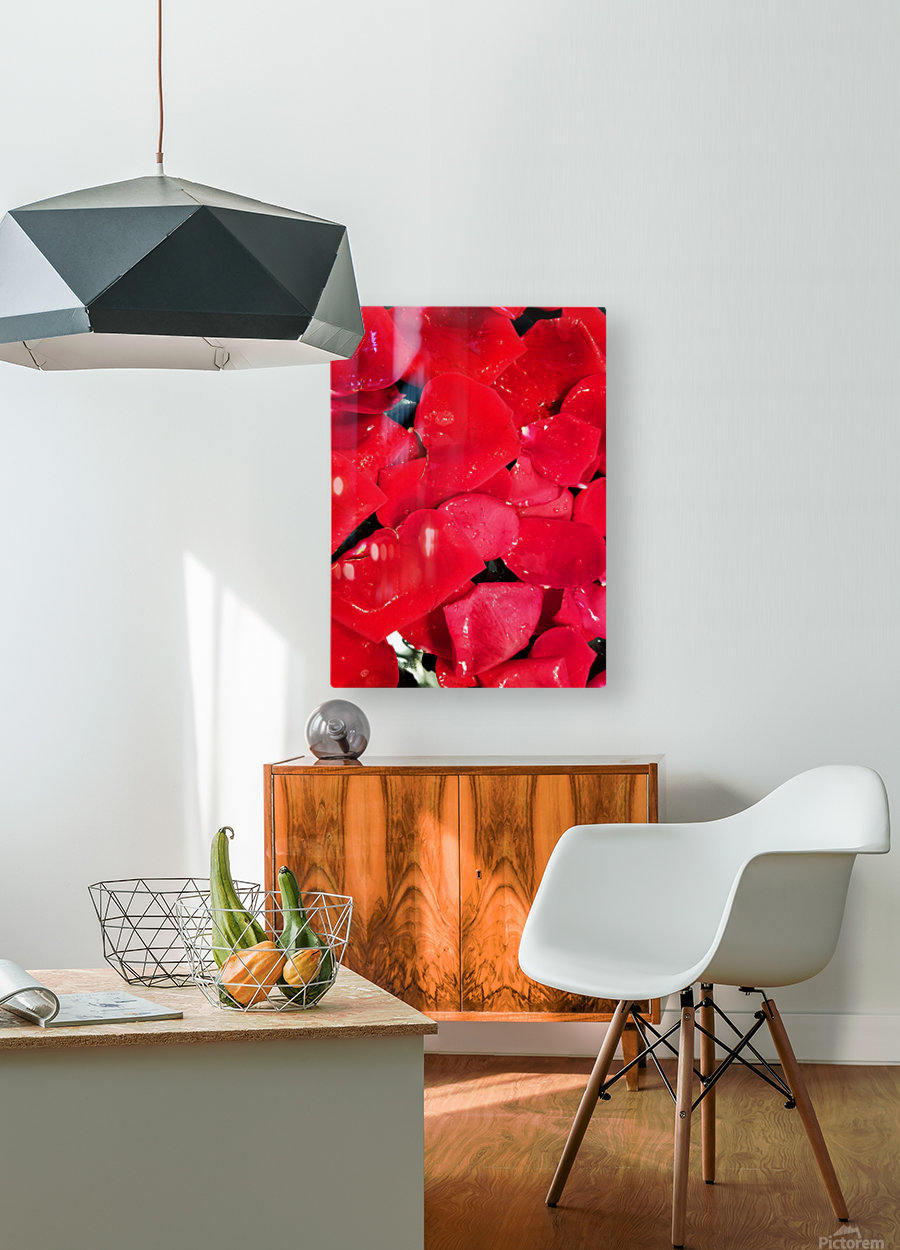 Red Roses  HD Metal print with Floating Frame on Back