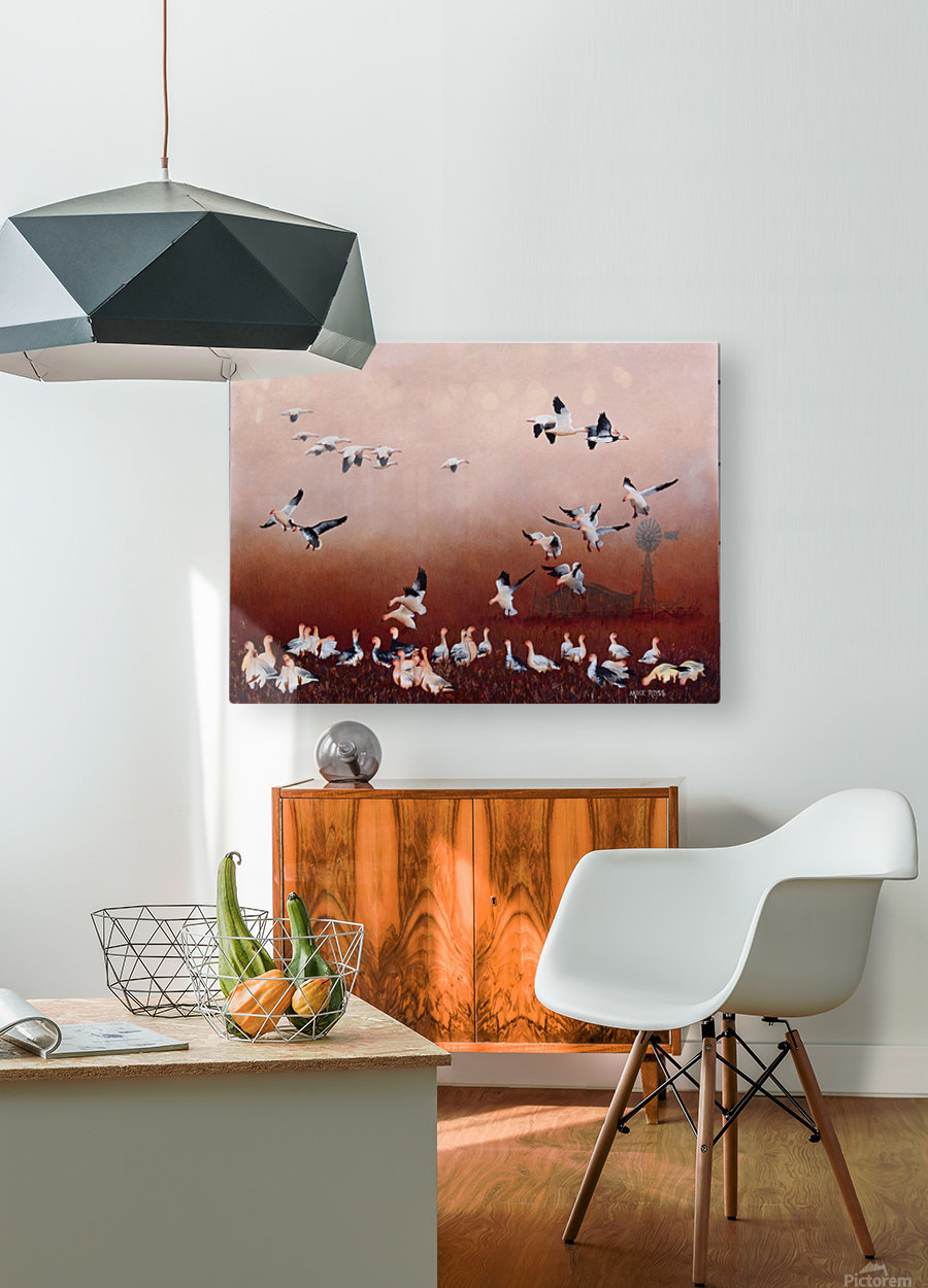 Snow Geese  HD Metal print with Floating Frame on Back