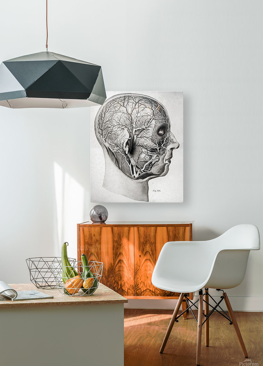 Nerves and Blood Vessels of the Head  HD Metal print with Floating Frame on Back