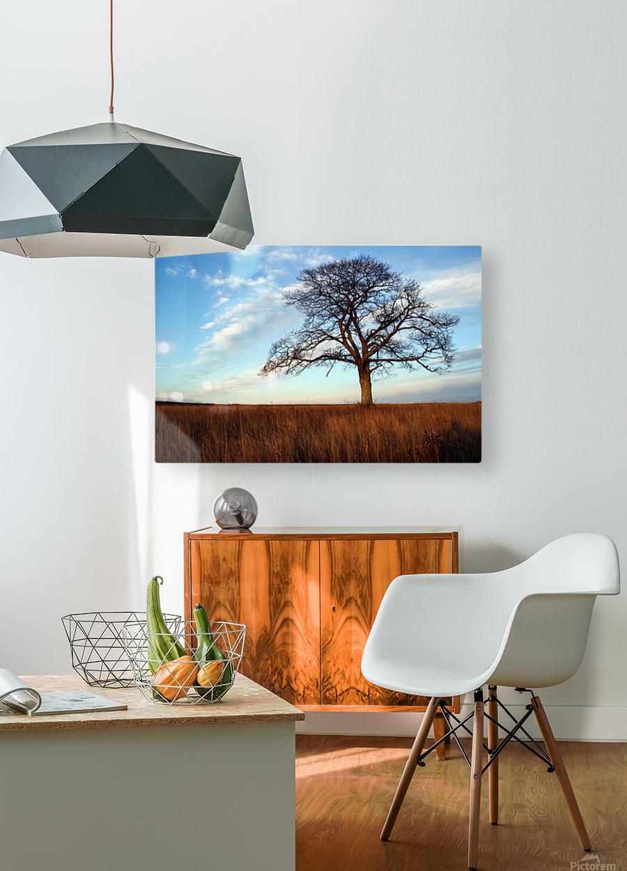 Shubenacadie Tree  HD Metal print with Floating Frame on Back