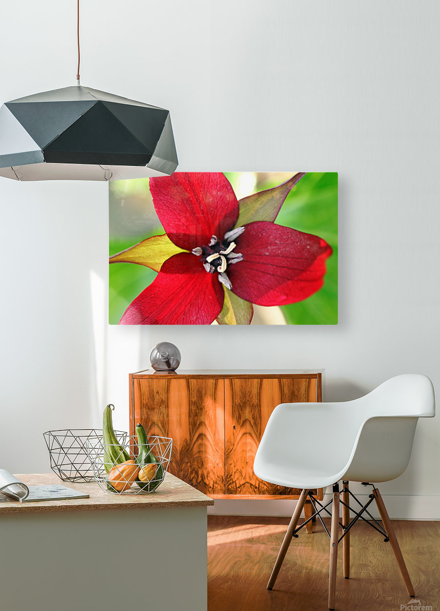 Dark Red Trillium  HD Metal print with Floating Frame on Back