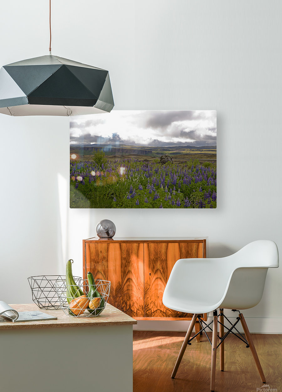 Iceland in Bloom  HD Metal print with Floating Frame on Back