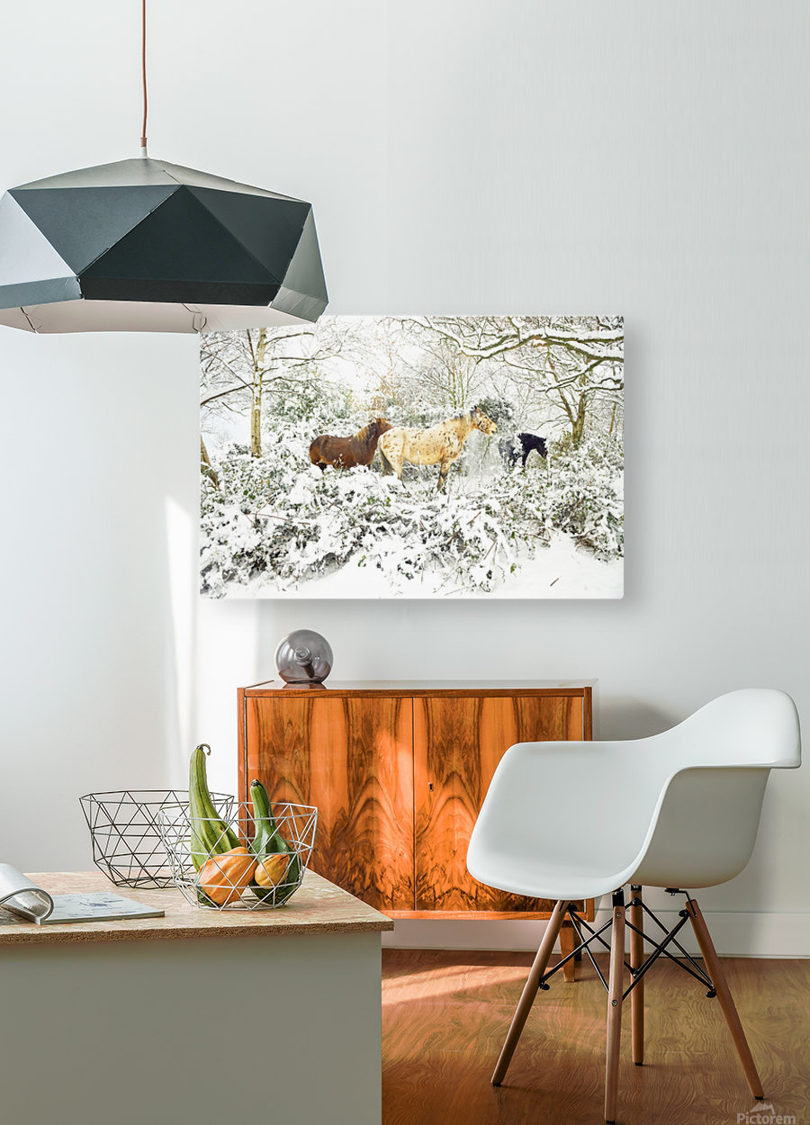 SNOWY APPALOOSA  HD Metal print with Floating Frame on Back