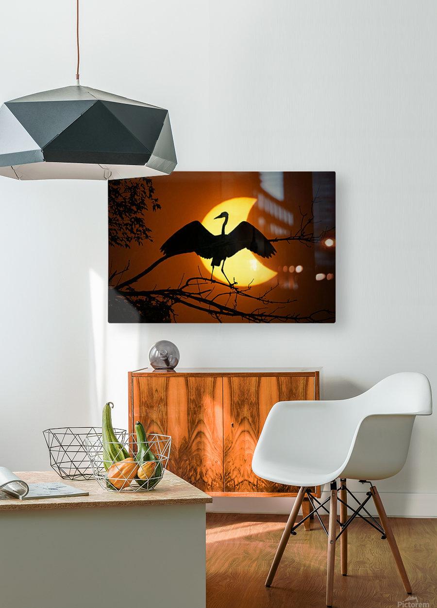 Egret Eclipse  HD Metal print with Floating Frame on Back
