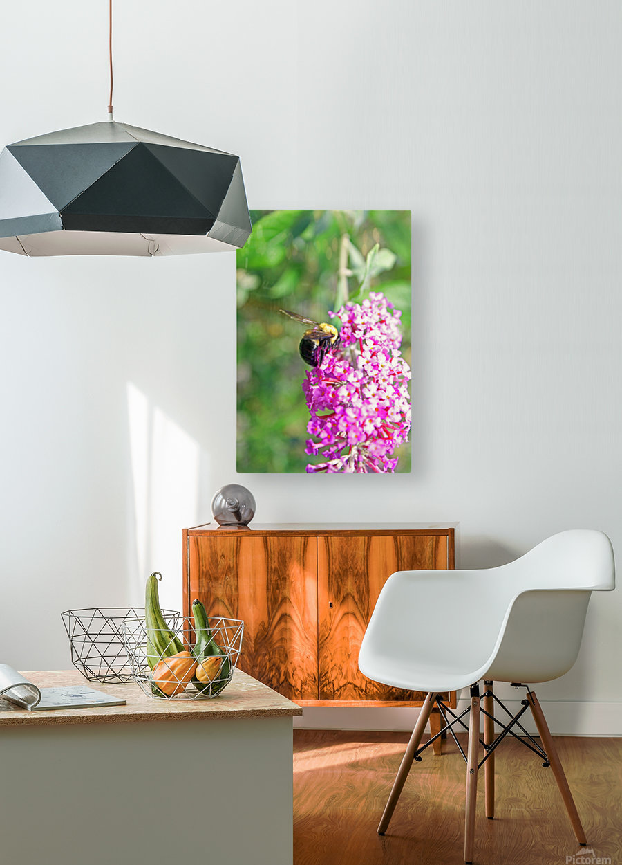 Bumblebee on a Flower  HD Metal print with Floating Frame on Back