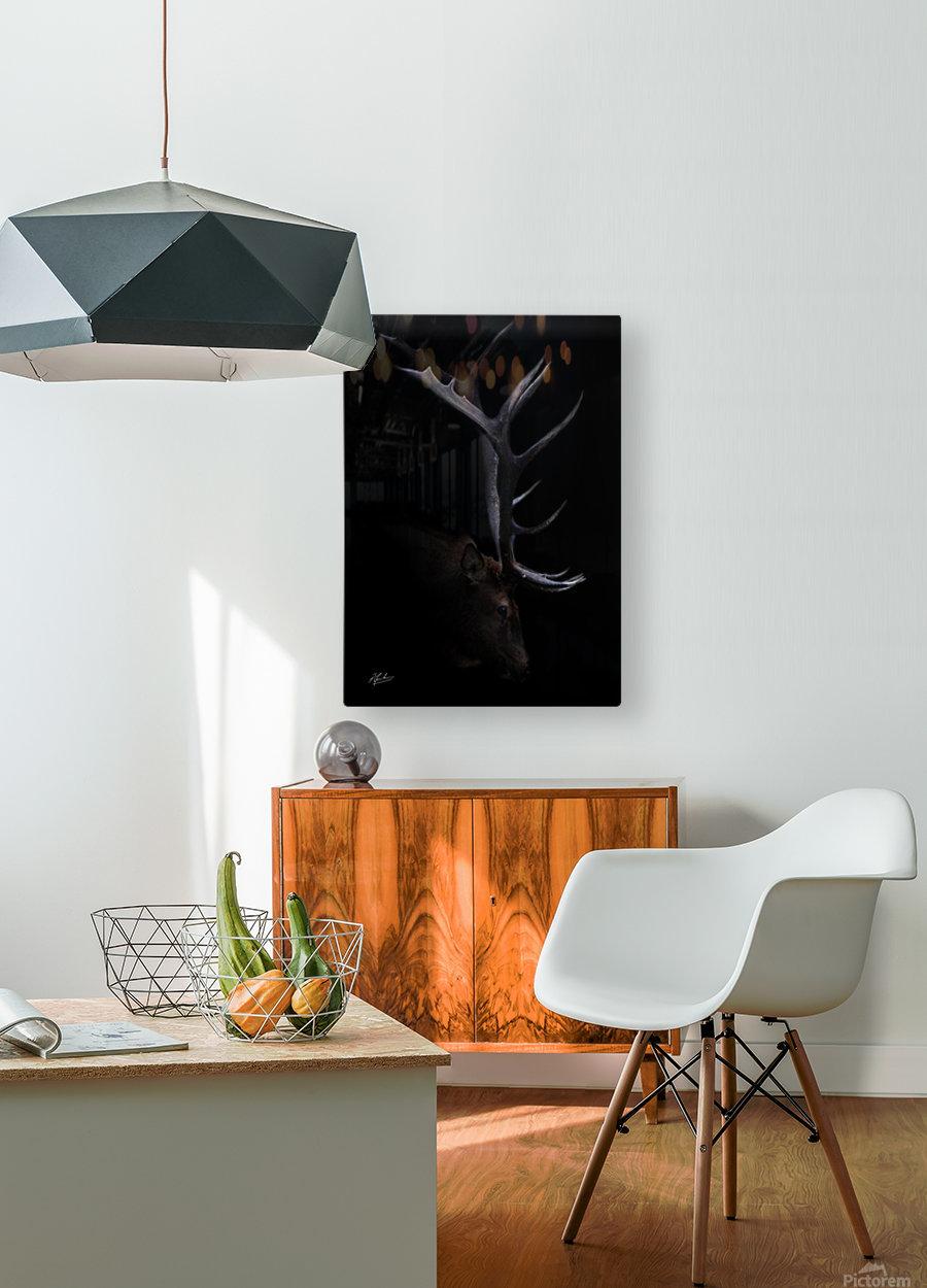 Elk in Black  HD Metal print with Floating Frame on Back