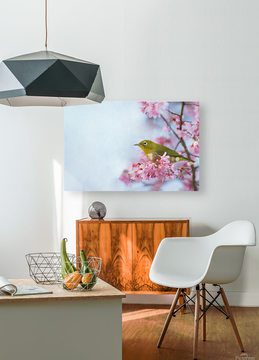 Bird In Sakura Cherry Blossom Tree  HD Metal print with Floating Frame on Back
