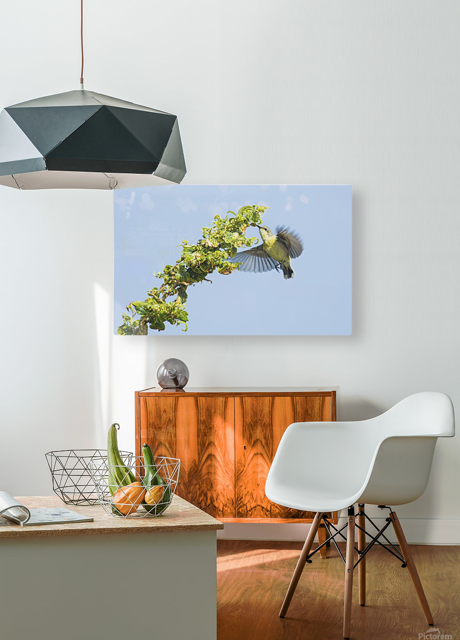 Flight moment  HD Metal print with Floating Frame on Back