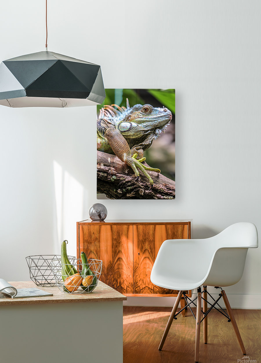 The Raptor  HD Metal print with Floating Frame on Back