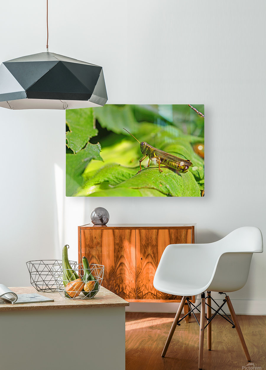 Chilling Grasshopper  HD Metal print with Floating Frame on Back