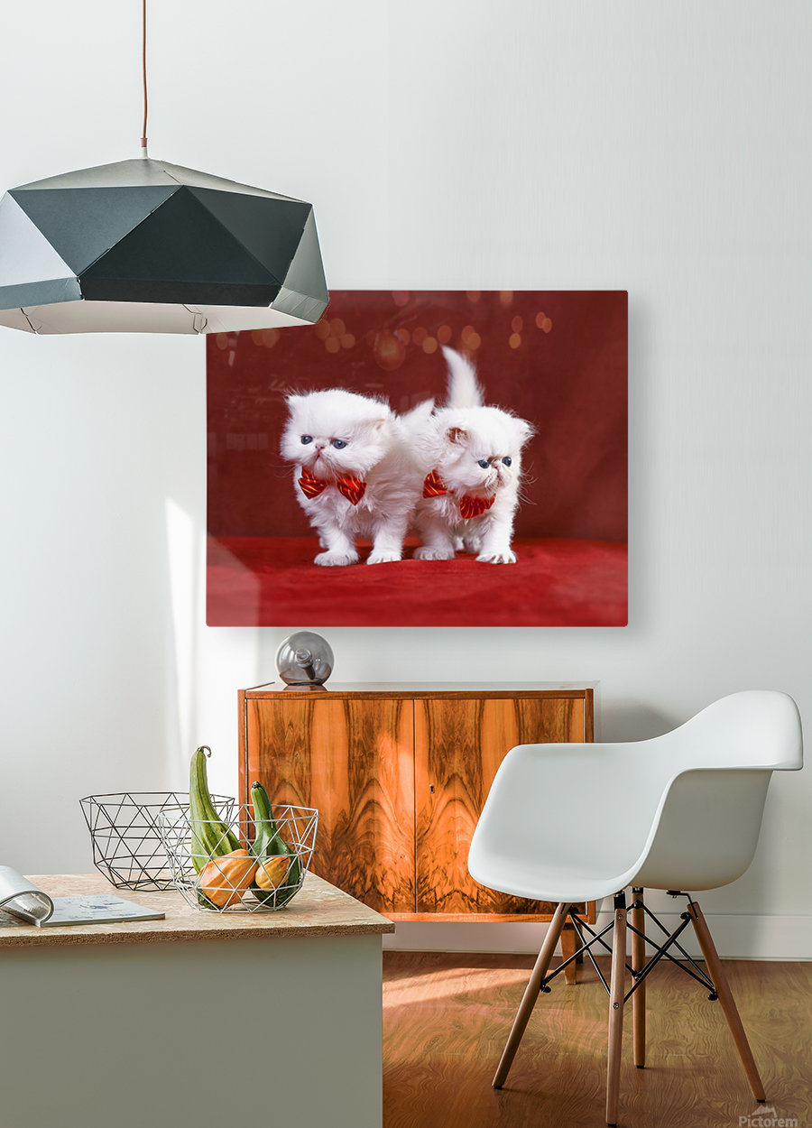 White Persian Kittens with bow ties  HD Metal print with Floating Frame on Back