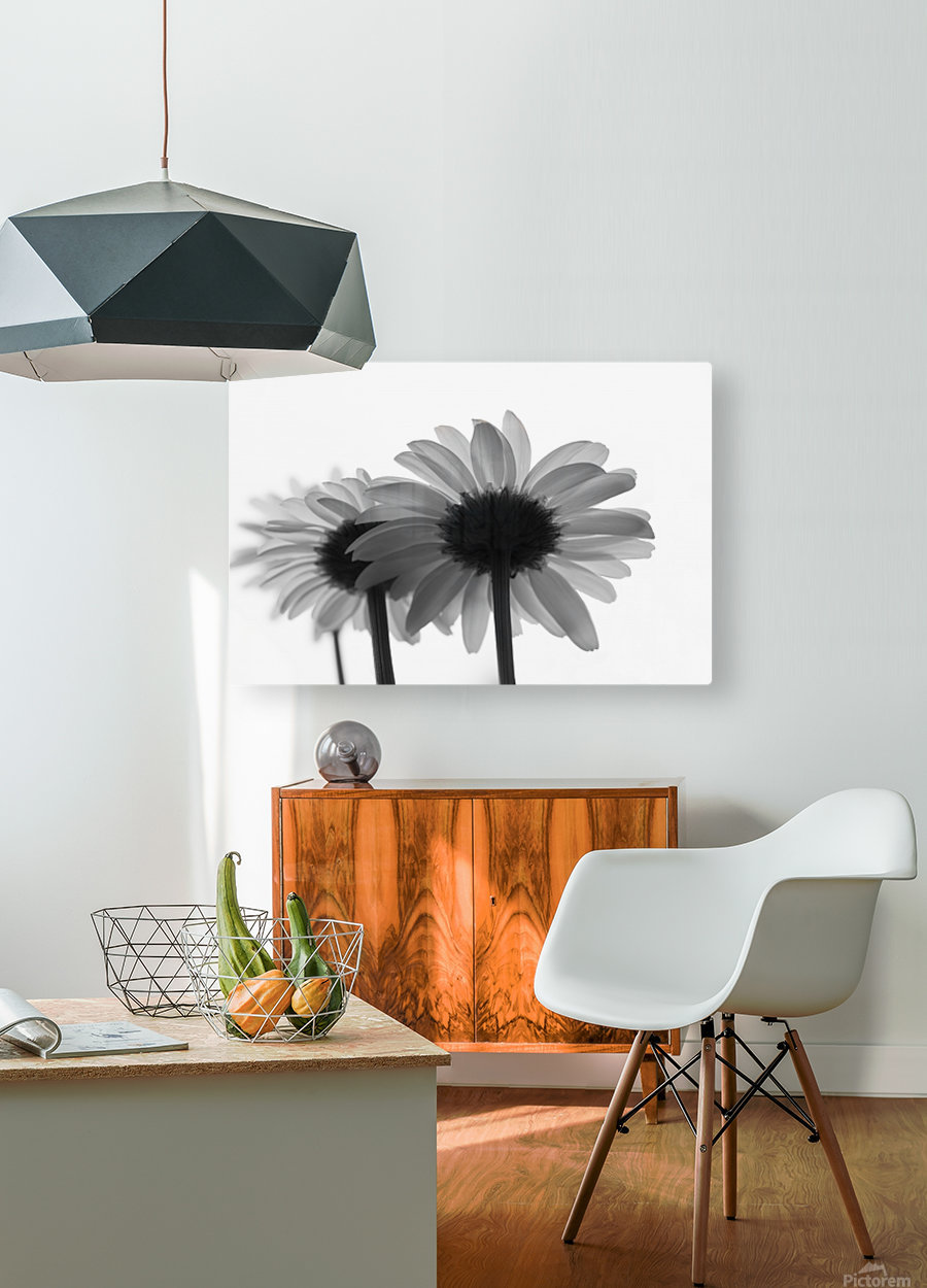 Daisies Rowing To The Left BW  HD Metal print with Floating Frame on Back